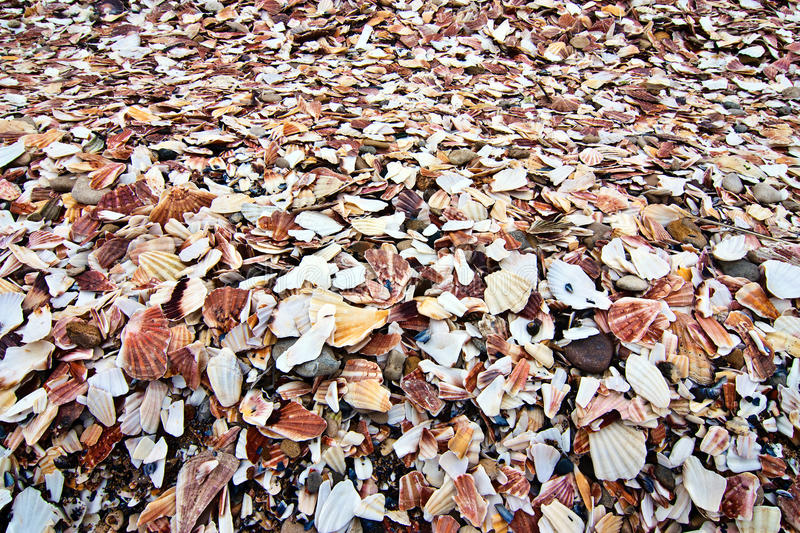 Download Pile Of Broken And Discarded Seashells Stock Photo - Image: 34282046