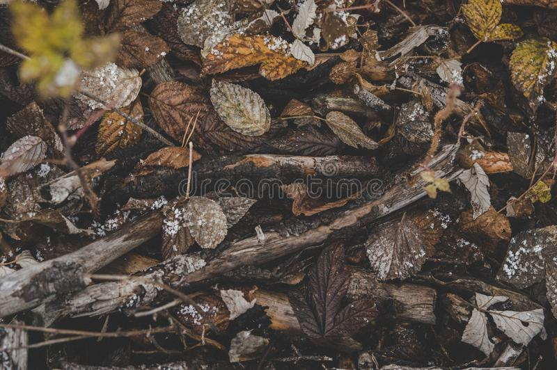 Pile of Brown Tree Branches and Dried Leaves royalty free stock image