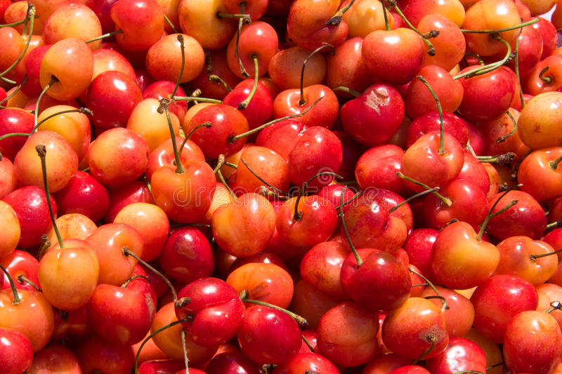 Pile of Cherries royalty free stock photo
