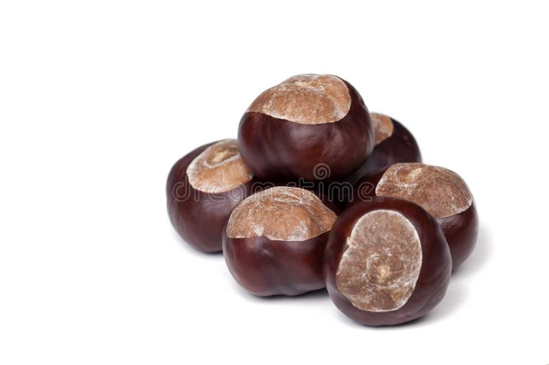 A pile of chestnuts, conkers isolated on white background, closeup. A pile of chestnuts, lots of conkers isolated on white background seen from up close royalty free stock photos