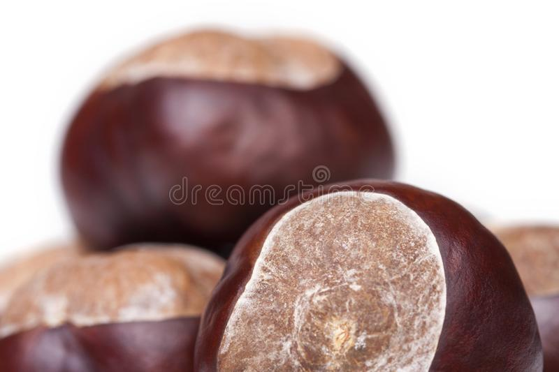 A pile of chestnuts, conkers isolated on white background, macro, extreme closeup. A pile of fresh chestnuts, conkers isolated on white background, macro stock photo