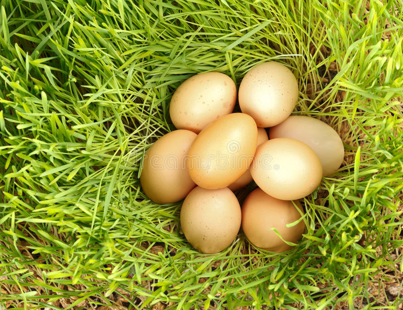 Download Chicken Eggs Between Green Wheat Stock Image - Image: 29761539