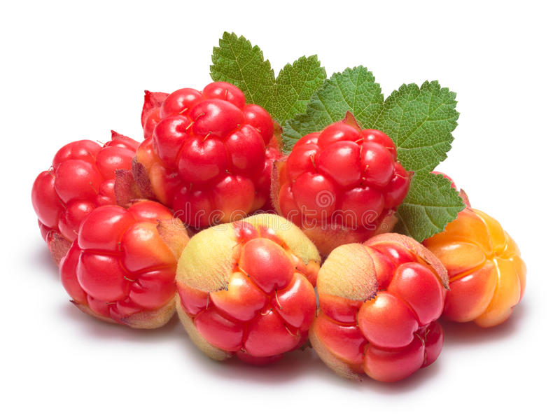 Pile of cloudberries (Rubus Chamaemorus). With leaves. Clipping paths, berries and shadow separated, infinite depth of field stock images
