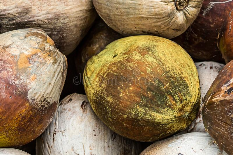 Pile of coconuts brown natural pattern close-up set of palm nuts tropical fruit background royalty free stock photos