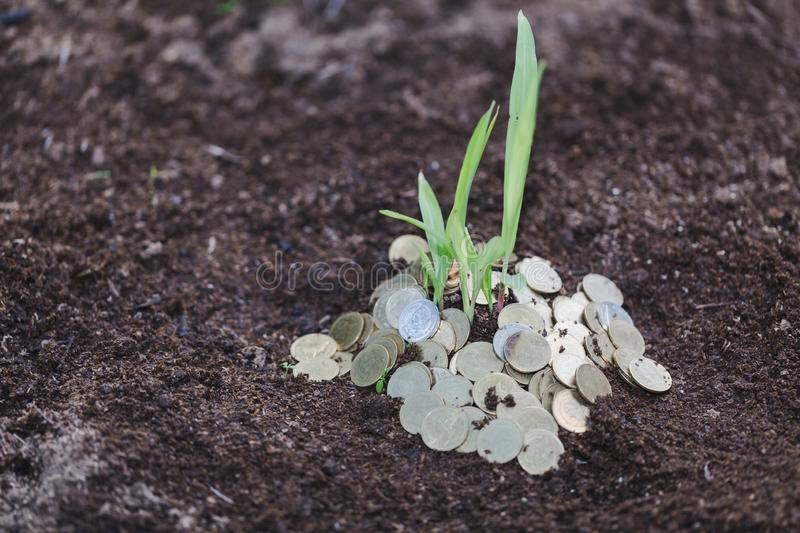 Pile of coins with plant on top for business, Money growth Saving money. Upper tree coins to shown concept of growing business stock photography