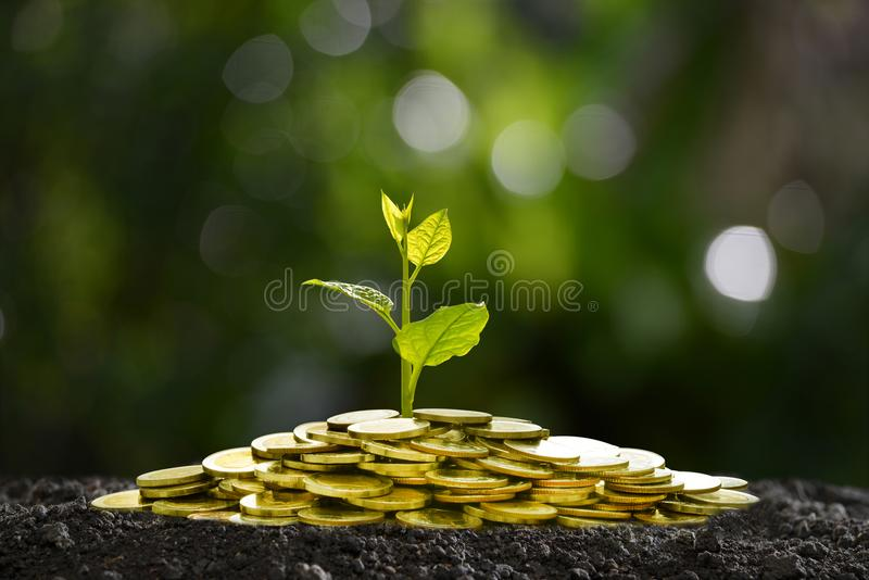 Pile of coins with plant on top for business, saving, growth, economic concept royalty free stock images