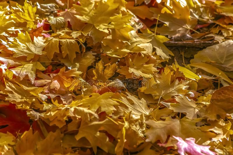 Pile of colored leaves on the ground in autumn royalty free stock photography