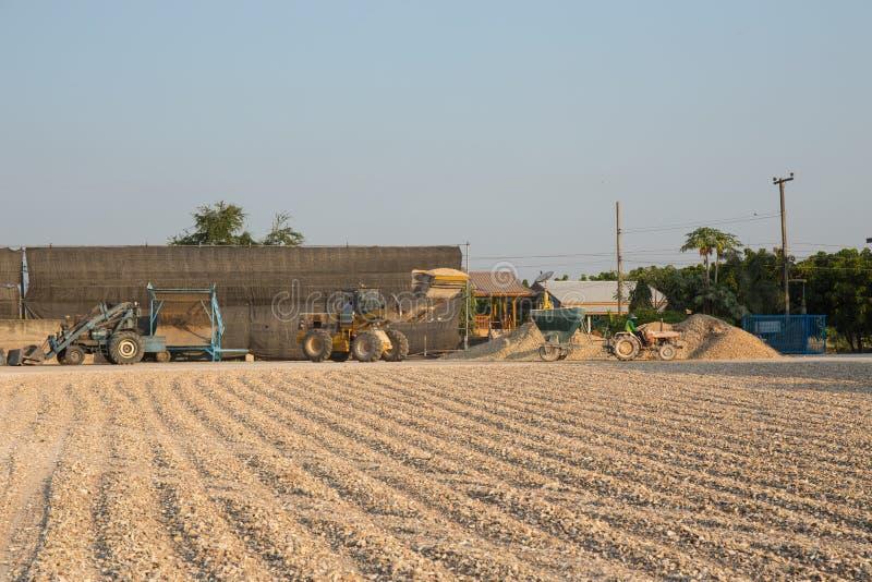Pile crue de manioc de transfert de travailleur par le tracteur au camion avant photographie stock libre de droits
