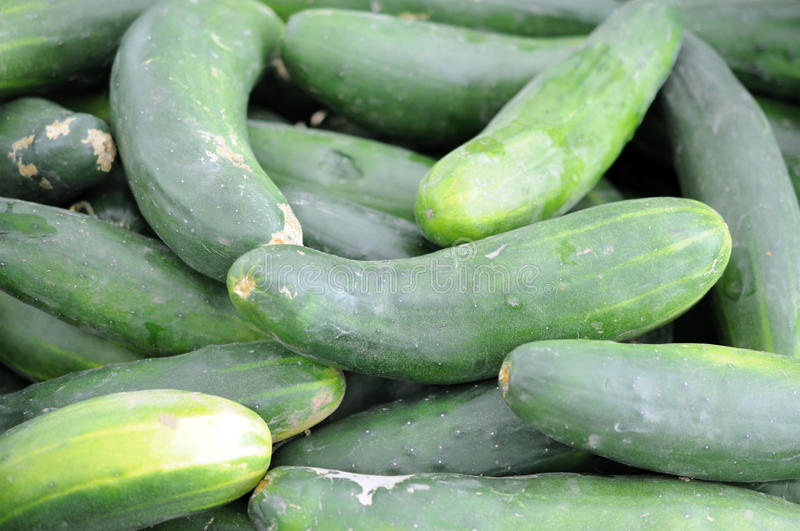 Download A pile of cucumber stock image. Image of nutrition, plant - 28324779