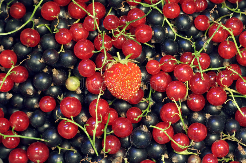 Pile of currants with a strawberry on top royalty free stock images