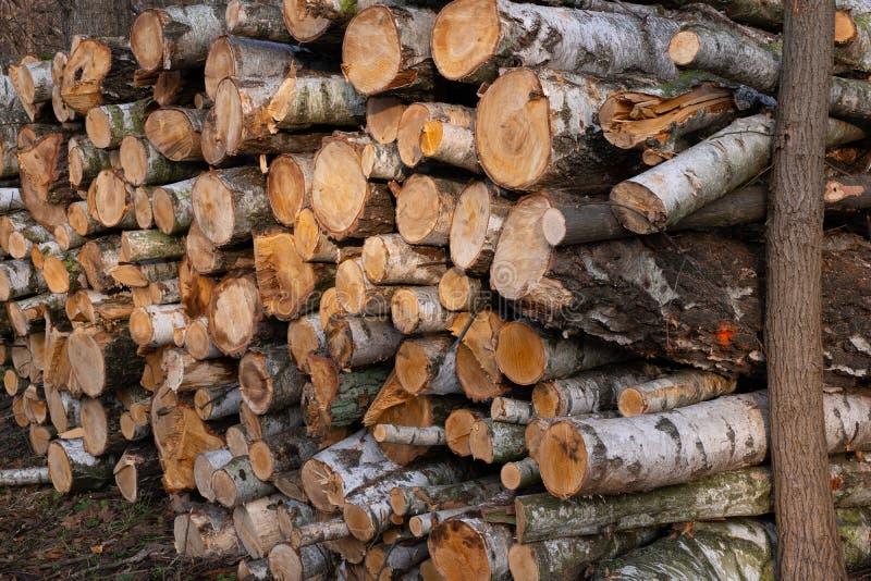 Pile of Cut Birch Trees Logs stockfotos