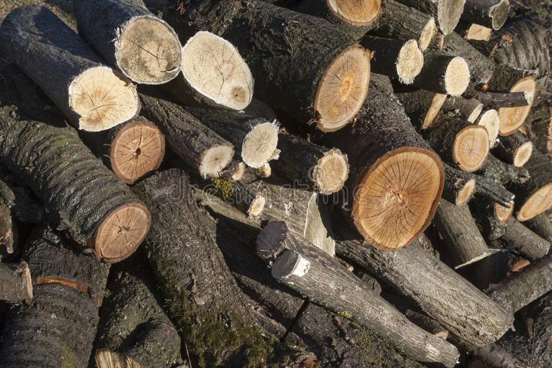 Pile of the cut logs. Close up.  stock image