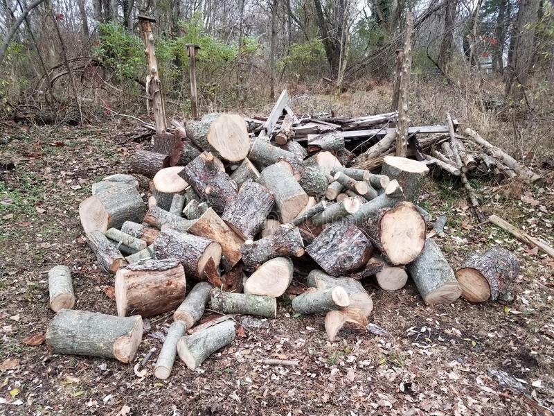 Pile of cut logs or firewood in forest or woods. Pile or mound of cut logs or firewood in forest or woods royalty free stock photos