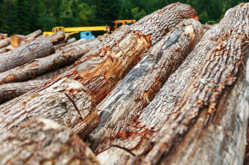 A pile of cut logs in the forest. Logging near a sawmill in a rural area, with fallen wood. Logs in the foreground, technology in the background stock photography