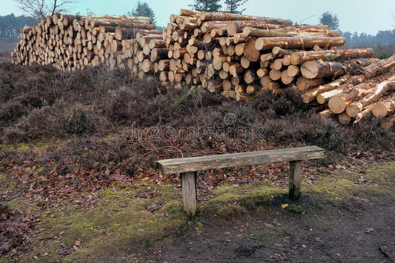 Pile of cut logs on heathland with bench in foreground stock images