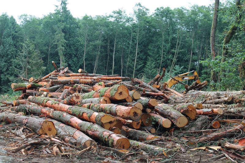 Pile of cut logs in a Pacific Northwest forest clearing. A pile of freshly cut logs in a recently logged Pacific Northwest forest clearing stock photography