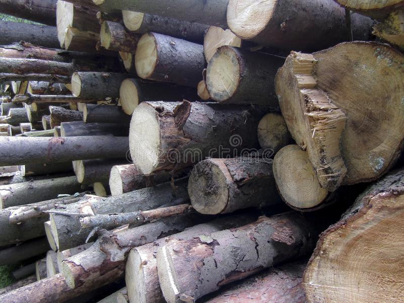 A pile of cut tree logs. Set of firewood materials for lumber industry. Collection of wood logs, stubs, tree, trunks.  royalty free stock image