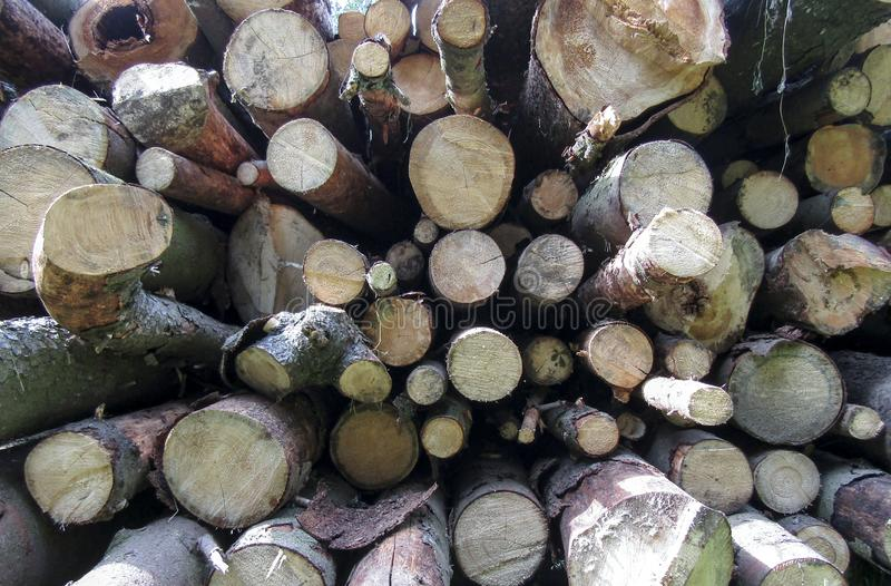 A pile of cut tree logs. Set of firewood materials for lumber industry. Collection of wood logs, stubs, tree, trunks.  royalty free stock photos