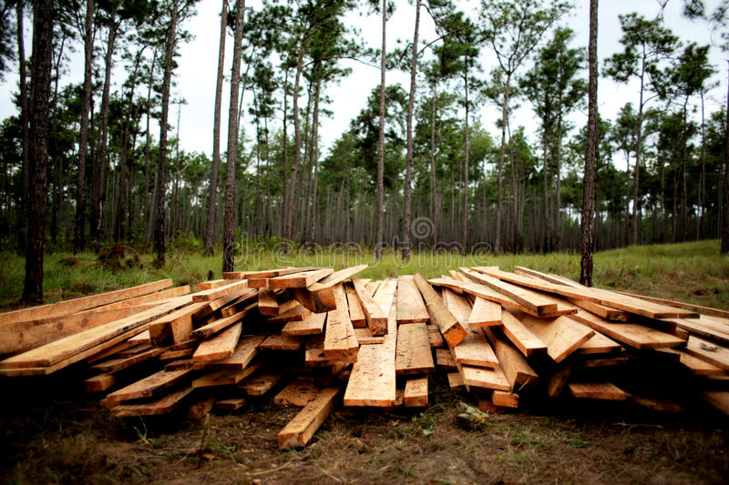 A Pile of Cut Wood royalty free stock photo