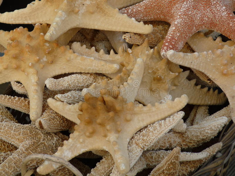 Pile d'étoiles de mer photos stock