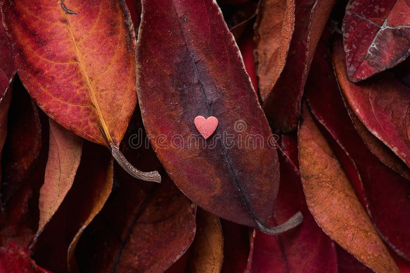 Pile of Dark Red Leaves with Small Heart Shape Pink Sugar Candy on Top. Rich Vibrant Crimson Color. Thanksgiving Fall Valentines royalty free stock photos