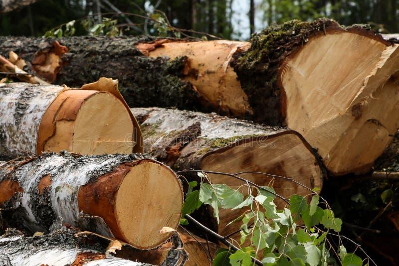 Pile de billes de bouleau de chêne avec feuilles d'un bout d'arbre d'un fond d'arbre fermentation photographie stock libre de droits