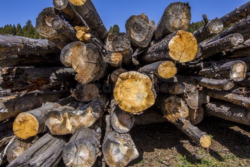 Pile de bois âgé images stock
