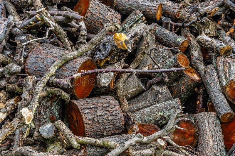 Pile de bois, de branche d'arbre ou de rondin, photo stock