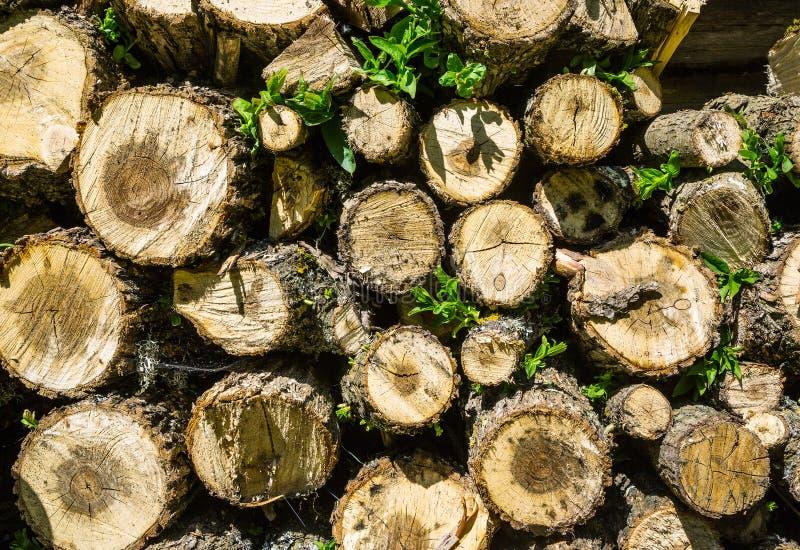pile de bois de chauffage empilé image libre de droits