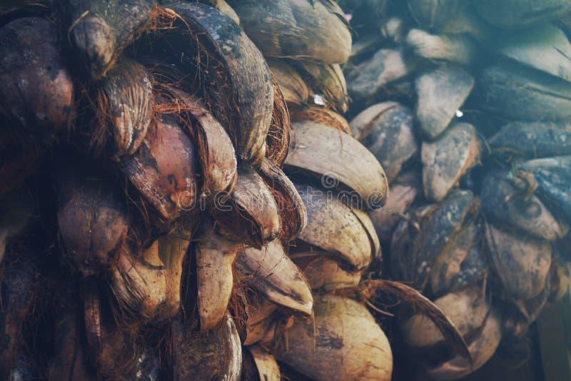 pile de cosse de noix de coco images libres de droits