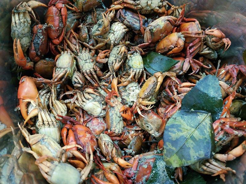 Pile de crabe sal? bouilli, pour la nourriture tha?landaise de ventre de som image stock
