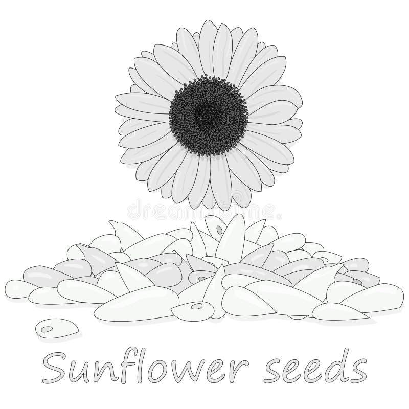 Pile de graines de tournesol contre l'illustation blanc de fond illustration de vecteur