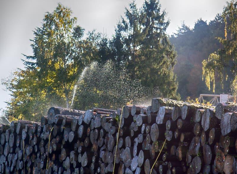 Pile de l'eau des rondins photographie stock libre de droits