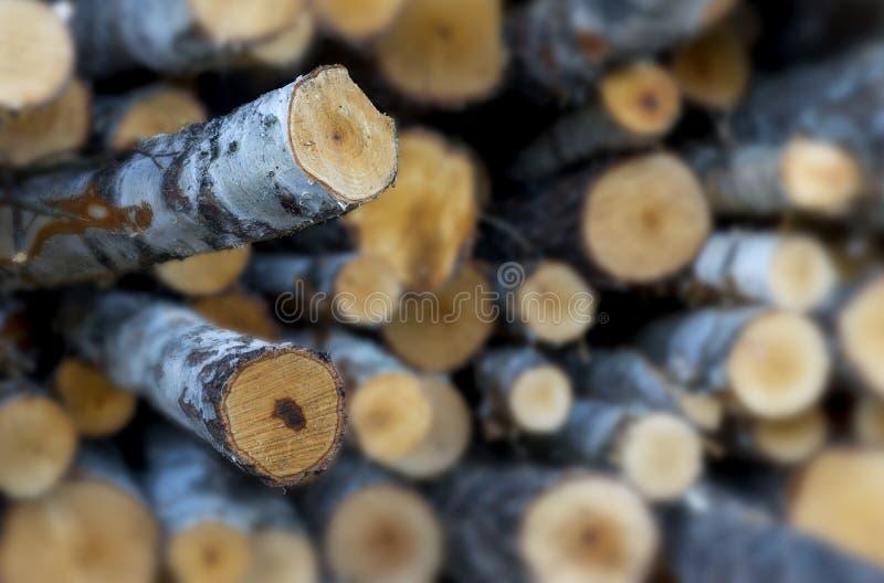 Pile de logarithmes naturels d'arbre de bouleau photographie stock