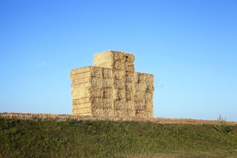 Pile de paille de blé photographie stock libre de droits