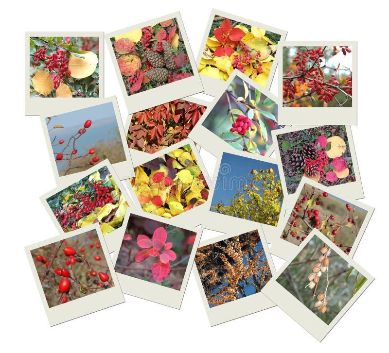 Pile de projectiles polaroïd de photo avec des teintes d'automne illustration stock
