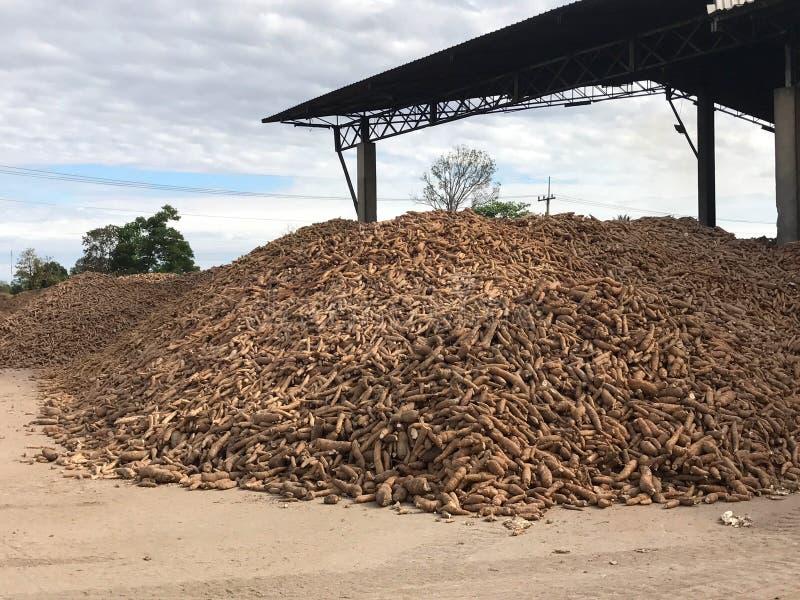 Pile de racine de manioc ou de tapioca pour l'industrie d'amidon image libre de droits