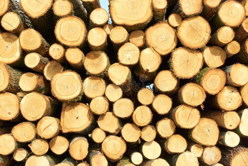 Pile de rondins d'arbre avec des anneaux image stock