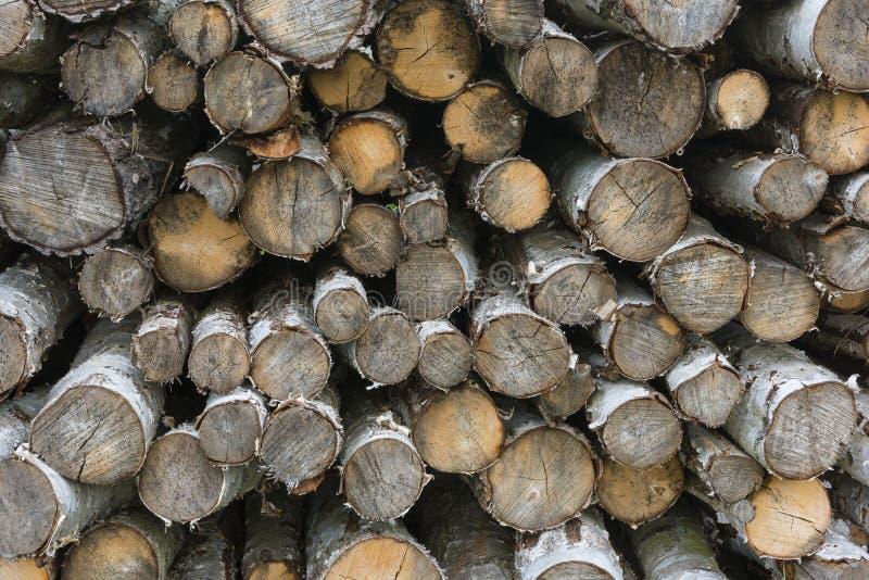 Pile de rondins de bouleau photos libres de droits