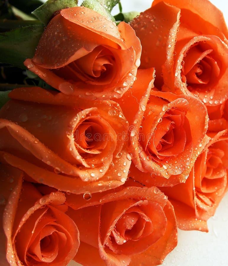 Pile de roses de corail photos stock