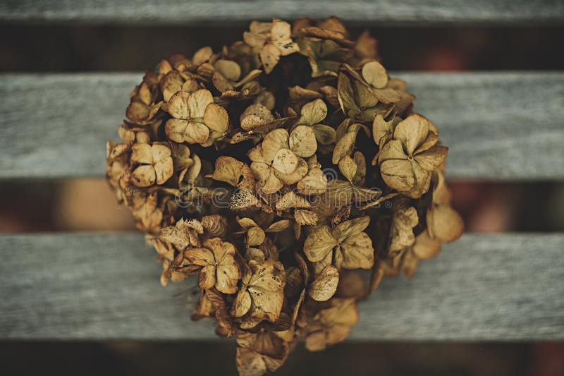 A pile of dead leaves of a plant. Pile of dead leaves of a plant royalty free stock photo