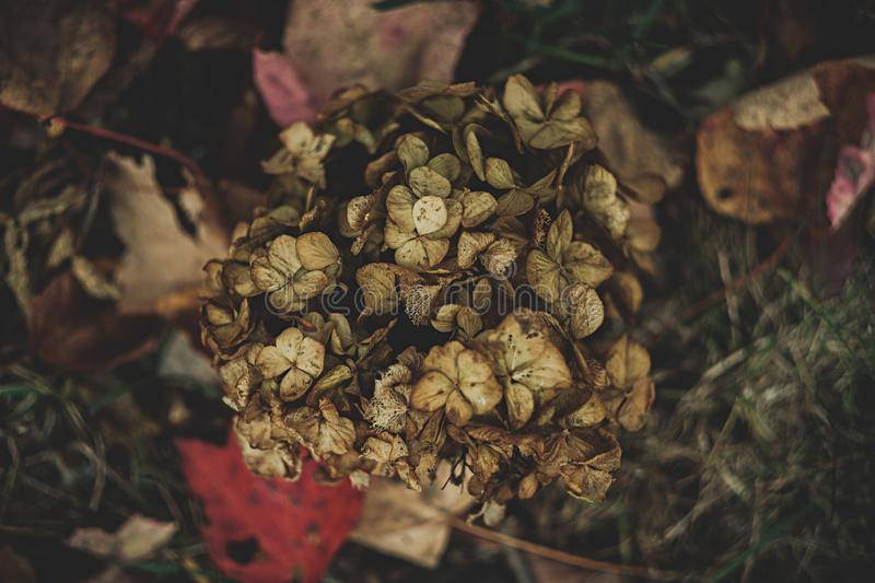 A pile of dead leaves of a plant. Pile of dead leaves of a plant royalty free stock photography