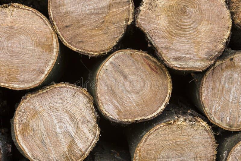 Pile dehors d'une manière ordonnée empilée de troncs coupés sur le DA ensoleillé intelligent photos stock