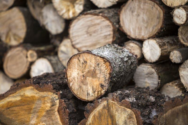 Pile dehors d'une manière ordonnée empilée de troncs coupés sur le DA ensoleillé intelligent photographie stock libre de droits