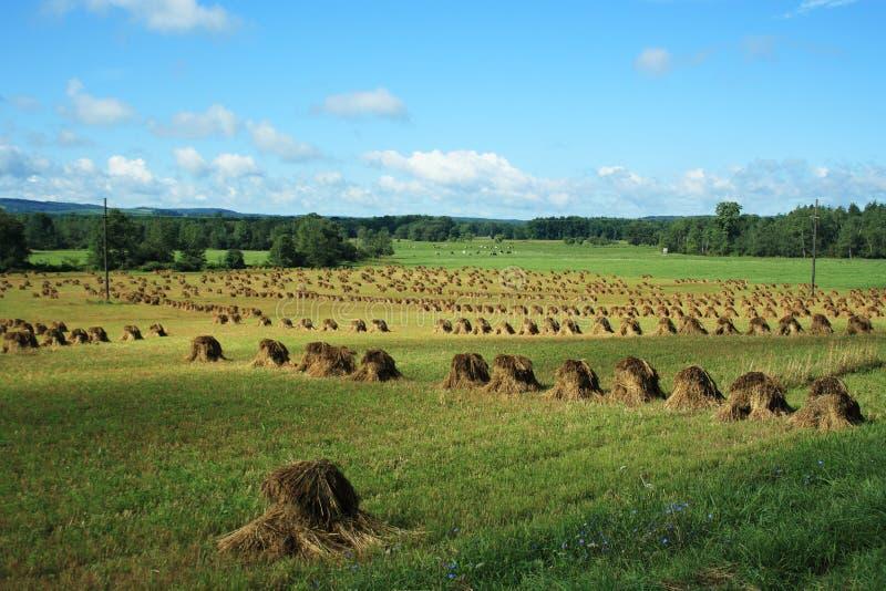 Pile del fieno dei Amish fotografie stock libere da diritti