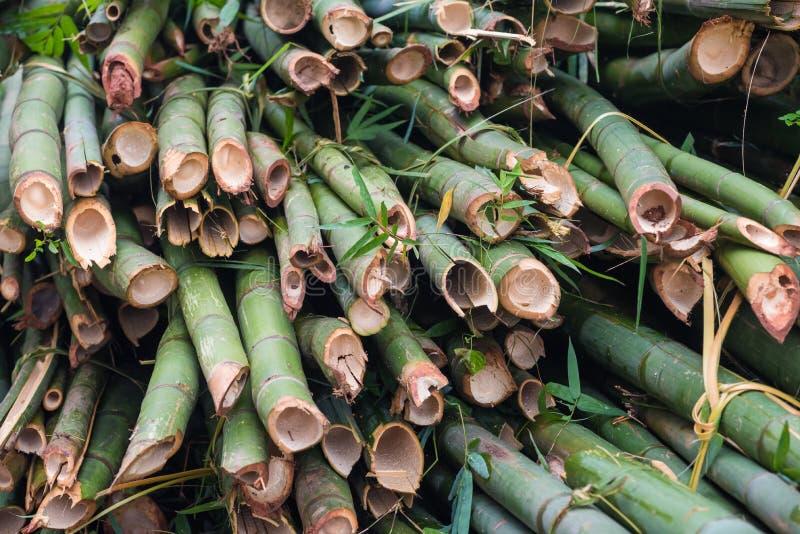 Pile des arbres en bambou coupés photo stock