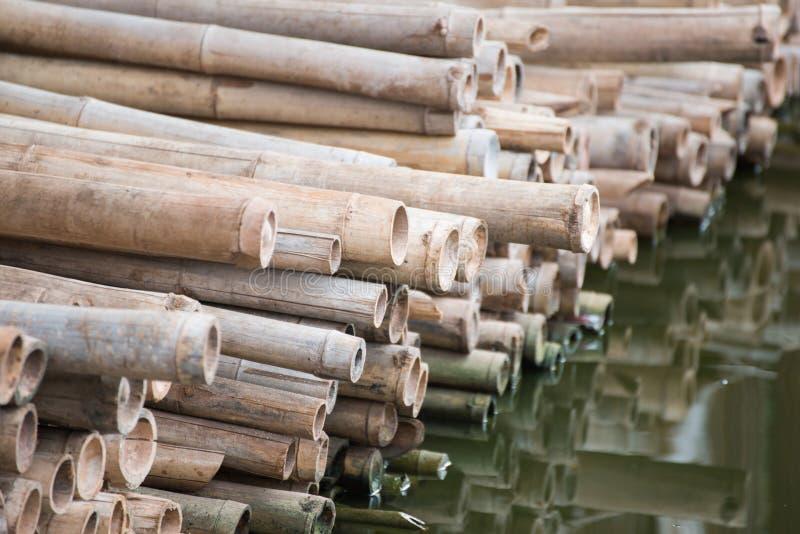 Pile des bâtons secs en bambou sur le bord de l'eau image libre de droits