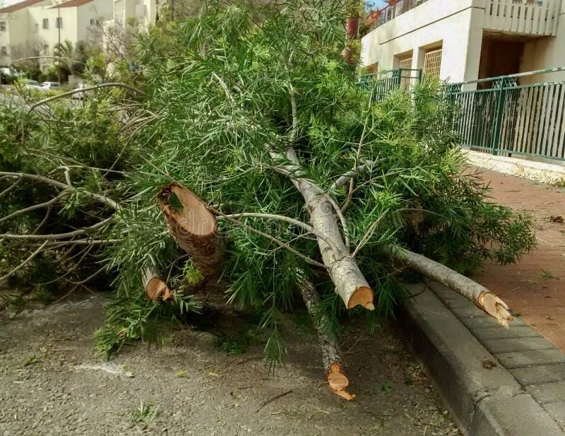 Pile des branches découpées, du côté de la route photos libres de droits