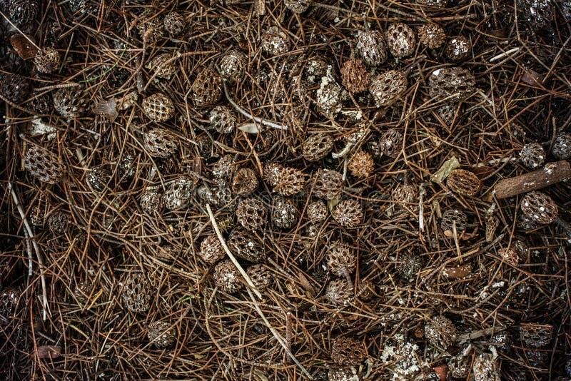 Pile des cônes de pin brun pour des milieux image stock