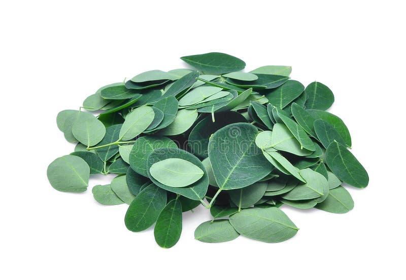 Pile des feuilles fraîches de moringa d'isolement sur le blanc photographie stock libre de droits
